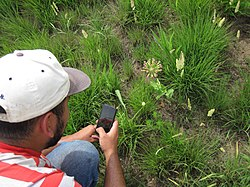 Man in baseball cap in a prairie taking a photo of a pink wildflower with his smartphone