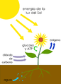 Photosynthesis-es.png