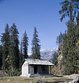 Picea smithiana and roadside shelter near Solang.jpg