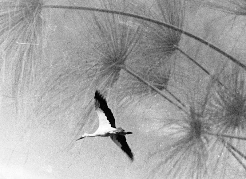 גן-שמואל-בברכות הדגים 1975-9