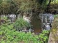Pincey Brook bridge outflow at Greenhill, Hatfield Broad Oak, Essex.jpg