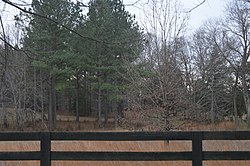 Pine Knot fenceline and woods.jpg