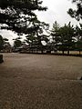 Pine trees in Horyuji Temple 20131218.jpg