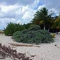Playa Palancab. Cozumel - panoramio (3).jpg