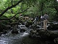 Playing in the river - geograph.org.uk - 530575.jpg