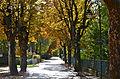 Poertschach Elisabethstrasse im Herbstkleid 11102013 242.jpg