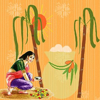 Thai Pongal Harvest festival celebrated in South India at the end of the harvest season.