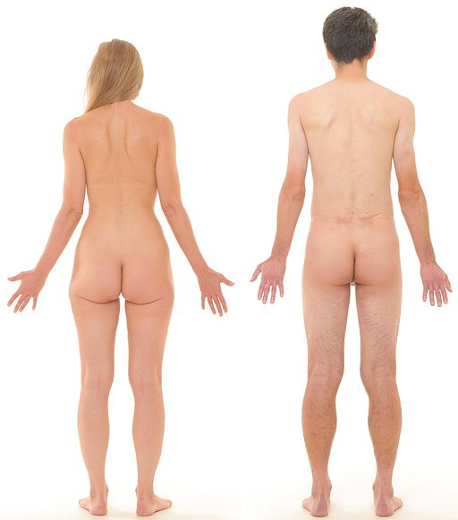 Posterior view of human female and male, without labels