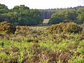 Pottern Ford from Yew Tree Heath, New Forest - geograph.org.uk - 184351.jpg