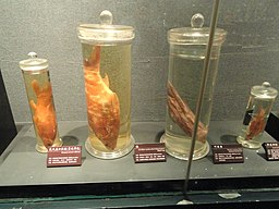 Preserved specimens - Kunming Natural History Museum of Zoology - DSC02404.JPG