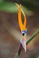 Pretoria Botanical Gardens-033.jpg