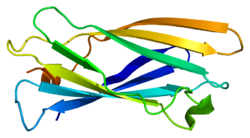 Protein AP1G1 PDB 1gyu.png