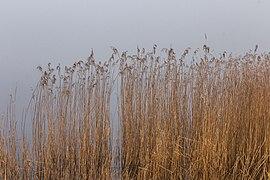 Put van Nederhorst in de mist. 28-02-2021. (d.j.b) 14.jpg