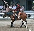 Quarter horse (2692908100).jpg