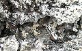 Quartz-Tellurium-chp6b.jpg