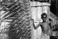 Queensland State Archives 1365 Plaited palms which are used by the natives for building huts at Palm Island c 1935.png