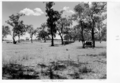 Queensland State Archives 5331 Town dam Morven January 1955.png