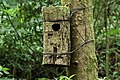 Quetzal nest box Monteverde.jpg