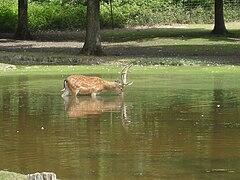 Obterre wikip dia for Zoo haute loire