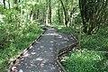 Réserve naturelle Marais Lavours Aignoz Ceyzérieu 2.jpg