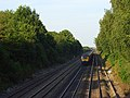 Railway at Shottesbrooke - geograph.org.uk - 524804.jpg