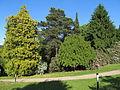 Rhododendronpark Kleine Bastei Rathen 7.JPG