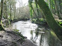 The River Lemon flowing through Bradley Woods