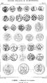 Rivista italiana di numismatica 1890 p 590.png