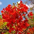 Roadside flowers in the Northern Territories of Australia (13113286813).jpg