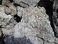 Rocha de estromatolitos característica na lagoa salgada.jpg