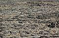 Rocks-Devonport-20070310-012.jpg