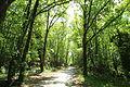 Route du Tilleul à Raizeux le 17 mai 2015 - 08.jpg