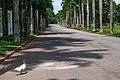 Rua vazia, apenas o pato..jpg
