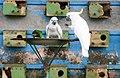 Ruling of Macaw.jpg