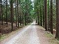 Sázava (ZR), lesní cesta.jpg