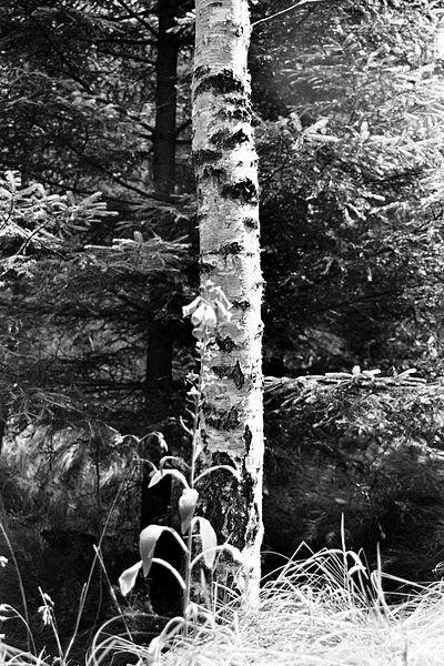 File:Sächsische Schweiz - 25.jpg