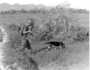 "Dogs in warfare - U.S. Army SP4 Bealock and German Shepherd scout dog ""Chief"" on patrol in Vietnam."