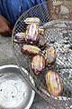 Safous grillés à Neves (São Tomé).jpg