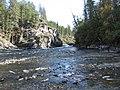 Salmon run at Adams River 2010 (5074063109).jpg
