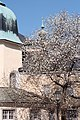 Salzburg - Altstadt - Bruderhof Loretkloster - 2019 03 24 - 1.jpg