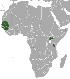 Savanna Dwarf Shrew area.png