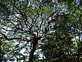 Scenery around Balgue - Ometepe Island - Nicaragua - 03 (30940590243).jpg