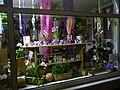 Schaufenster eines Floristen.JPG