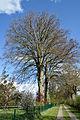 Schleswig-Holstein, Lutzhorn, Naturdenkmal 49-03 NIK 2917.JPG