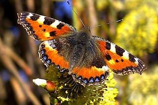 Schmetterling_1a_neucc.jpg
