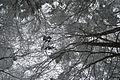 Schneebedecktes Blätterdach.jpg