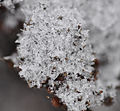 Schneekristalle-Goettingen01.jpg