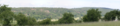 Schotten Rainrod Reipperts Barkbeetle Damaged Piceoideae Pano Cyl small.png