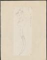 Sciurus spec. - 1700-1880 - Print - Iconographia Zoologica - Special Collections University of Amsterdam - UBA01 IZ20400077.tif