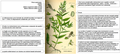 Scutellaria galericulata Thome DESC.png